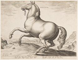 """A French Horse, from the first set of """"Equile Joannis Austriaci"""""""