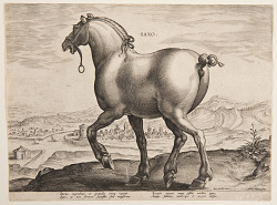 """A Saxon Horse, from the first set of """"Equile Joannis Austriaci"""""""