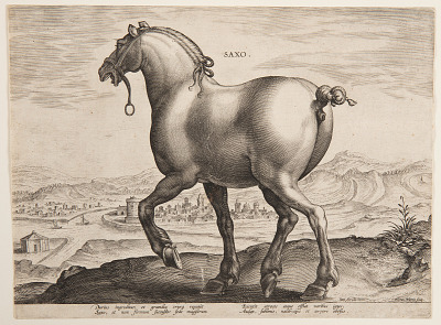 A Saxon Horse, from the first set of