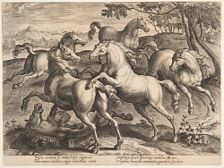 "Fighting Horses, from the fourth set of ""Equile Joannis Austriaci"""