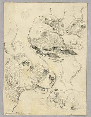 Drawing: Sketches of cows