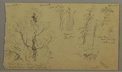 Flora Studies