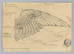 Study of a Wing