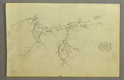 A Leafless Bough of a Tree