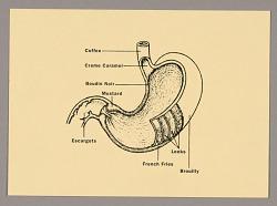 Restaurant Florent: Stomach Diagram