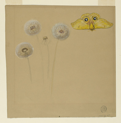 Study of White Daisy, Cammomile Stem with Two Petals, and a Cammomile Petal