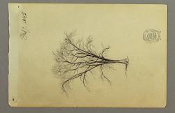 A Leafless Tree