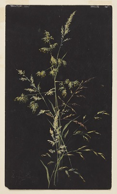 Study of Grass in Seed