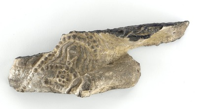Fragment: portion of torso and right forearm