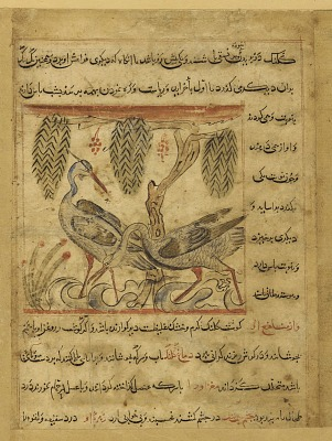 Folio from a <em>Manafi' al-hayawan</em> (Usefulness of animals) by Ibn Bakhtishu (d.1058); recto: Two herons under pendant branches; verso: Four grouses in flight