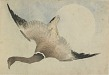 : Goose flying in front of the moon