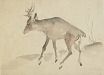 : Deer