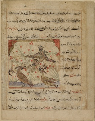 Folio from a <em>Manafi' al-hayawan</em> (Usefulness of animals) by Ibn Bakhtishu (d.1058); verso: Three hoopoes and a bush with red berries; recto: text, Description of hoopoes and their medicinal properties