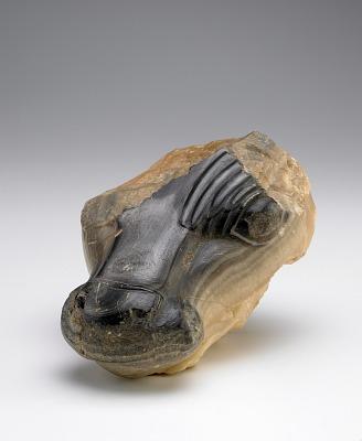 Bull's head, fragment
