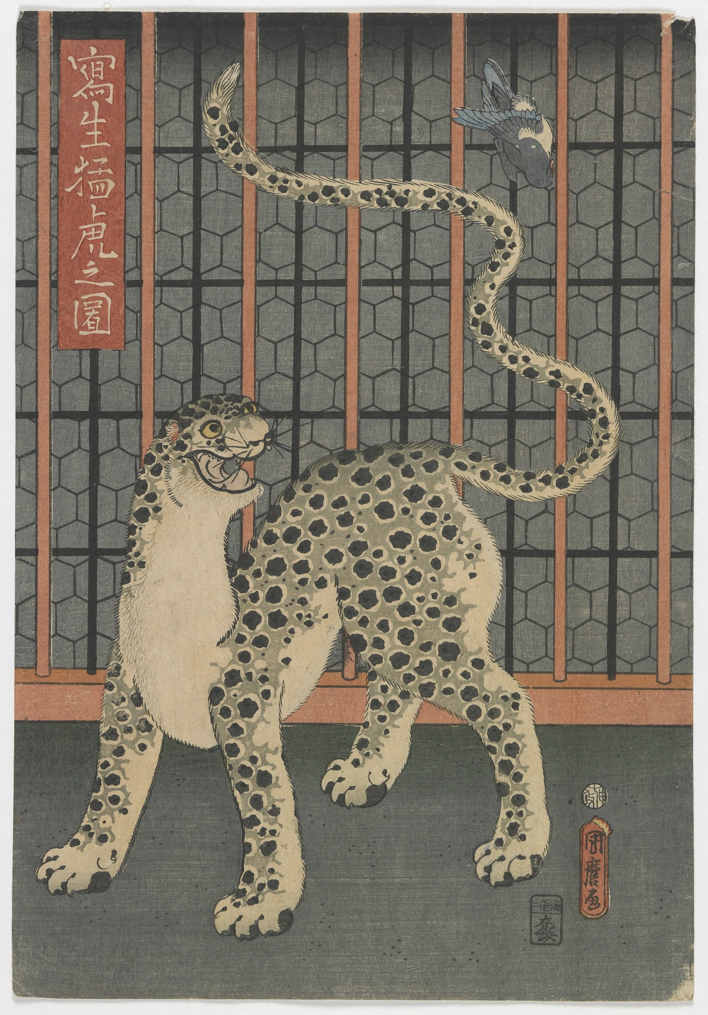 images for A Leopard Drawn from Life