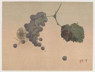 A rat and grapes