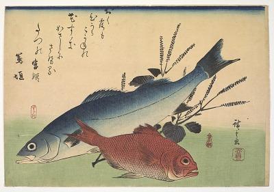 <em>Suzuki</em> (Lateolabrax japonicus) Japanese seaperch and <em>Kimmedai</em> (Beryx splendens) Alfosino