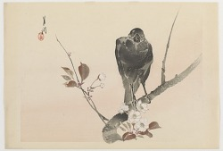Crow on a plum branch, from the series Twelve bird-and-flower prints