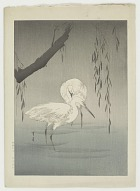 Egrets in a pond