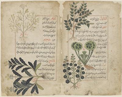 Double folio from a Kitab-i hasha'ish (The book of herbs)