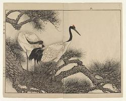 """Cranes/ Page From """"Keinen Gafu"""""""