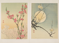 Album of sample woodblock prints of birds and flowers