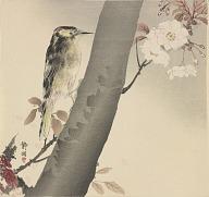 Woodpecker On Cherry