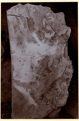 Excavation of Samarra (Iraq): Fragments of Wall-Paintings, from the Palace of the Caliph (Dar al-Khilafa, Jawsaq al-Khaqani, Bayt al-Khalifah), Square Reception-Hall Block, Room Identified as a Harem [graphic]