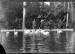 Tehran (Iran): Kakh-i Gulistan (Gulistan Palace): View of Inner Court's Pool with Swans [graphic]