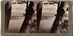 (15) Glorious Fuji, beloved by artists and poets, seen from N.W. through pines at Lake Motosu, Japan, 1904 or earlier. [graphic]