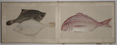 Untitled painting manual of fish and shellfish