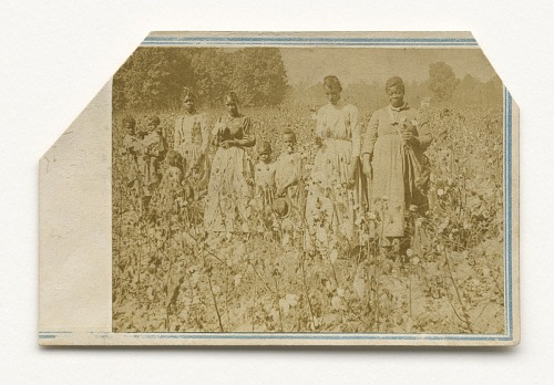 Image for Carte-de-visite of women and children in a cotton field