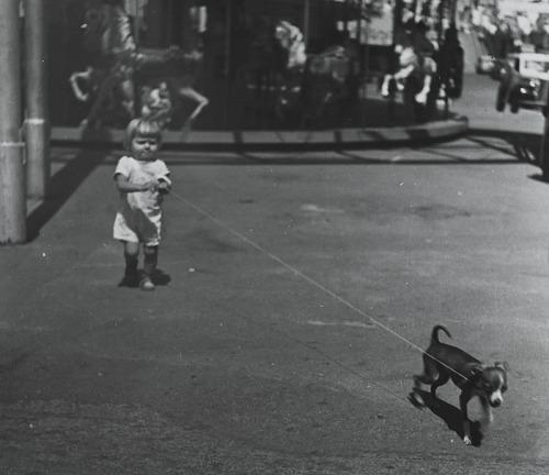 Image for Leading Dog