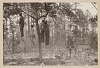 Thumbnail for Photograph of the lynched bodies of four men