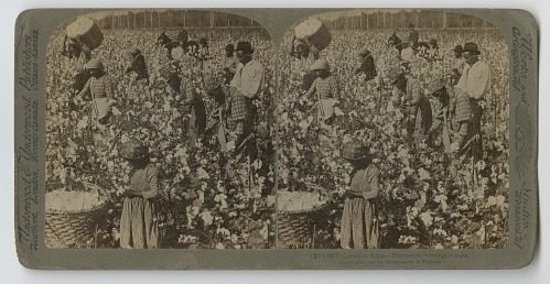 Image for Cotton is King - Plantation Scene, Georgia