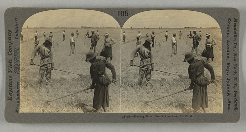 Image for Hoeing Rice, South Carolina, U.S.A.
