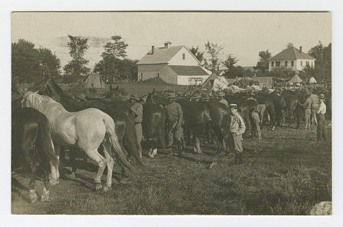 Image for Postcard of soldiers inspecting horses