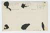 Thumbnail for Crockett Riding Mount Toro. Salinas Rodeo, 1919