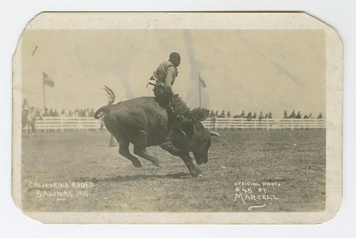 Image for California Rodeo, Salinas, 1919
