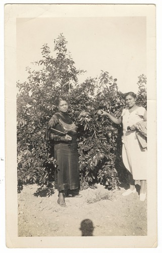Image for Photographic print of Eunice Jackson and Mamie Maria posing in front of a tree