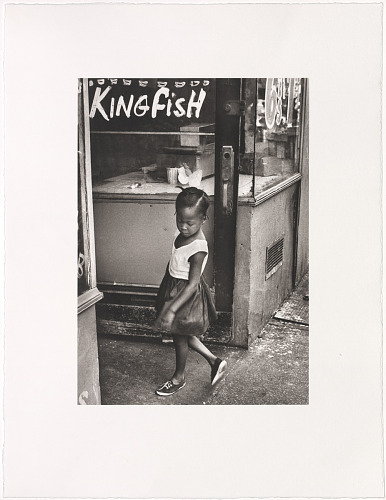 Image for Kingfish