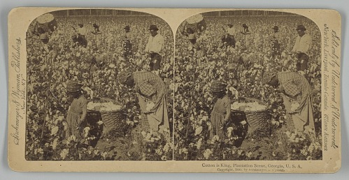 Image for Cotton is King, Plantation Scene, Georgia, U. S. A.