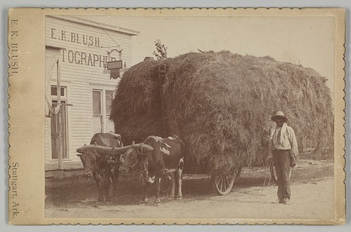 Image for Albumen print of a man with a full hay cart