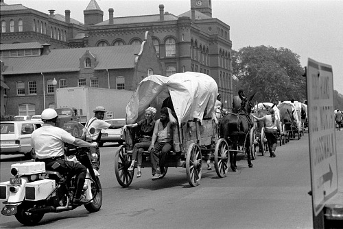 Image for Mule Train from Mississippi going through the city of Washington, D.C. June, 1968