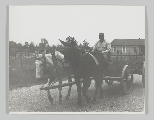 Image for Portrait of an anonymous man on a mule drawn cart at 6 a.m.