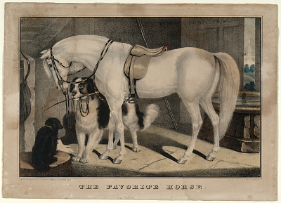 The Favorite Horse