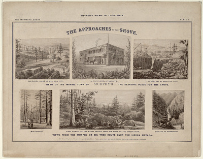 The Mammoth Grove. Plate I. The Approaches of the Grove