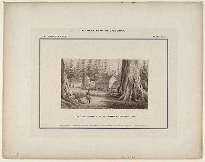 The Mammoth Grove. Plate VIII. The