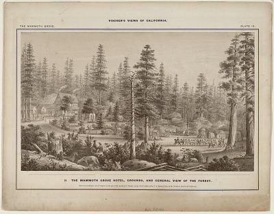 The Mammoth Grove. Plate IX. The Mammoth Grove Hotel, Grounds, and General View of the Forest.
