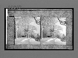 [Snow.] 5444 Interpositive